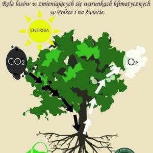 Rola lasów